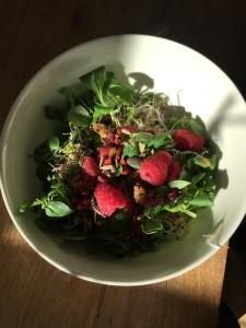 салат с ягодами и проростками